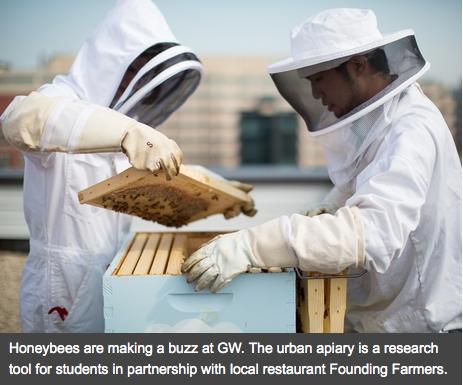 Ricky works alongside his fellow beekeeper to inspect a hive and evaluate its health.