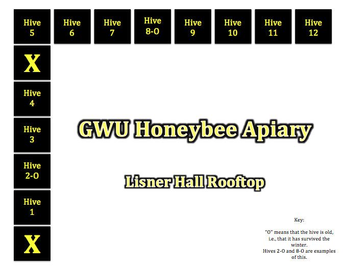 Flashback Friday Behold The Beauty Of Honeybees Gwbuzz