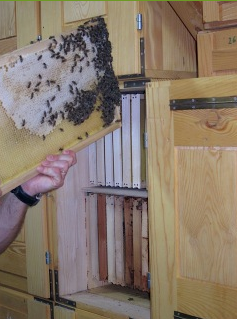 http://www.slovenianbeekeeping.com/index-one.html
