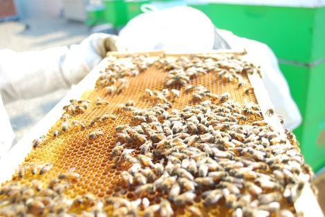 Our honeybees are super busy even through the late summer hours!