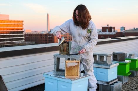 beekeeper_jb
